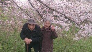 桜吹雪が~♪p(^-^)q